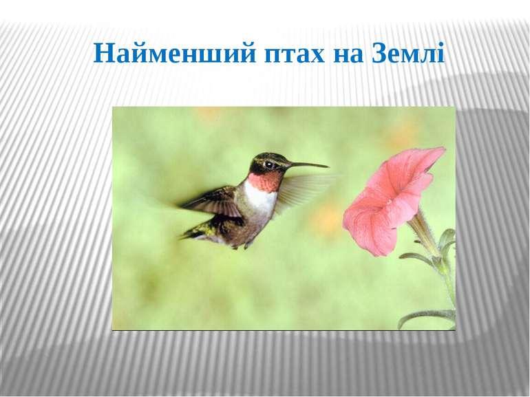 Найменший птах на Землі