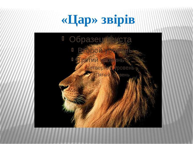 «Цар» звірів