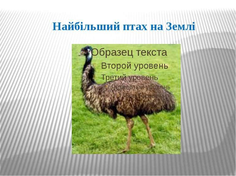 Найбільший птах на Землі