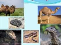 Тварини пустелі