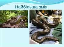 Найбільша змія