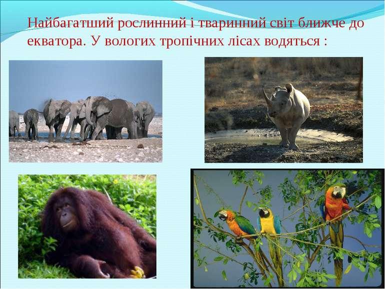 Найбагатший рослинний і тваринний світ ближче до екватора. У вологих тропічни...