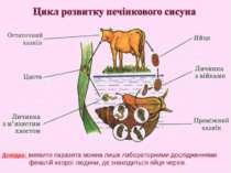 Довідка: виявити паразита можна лише лабораторними дослідженнями фекалій хвор...