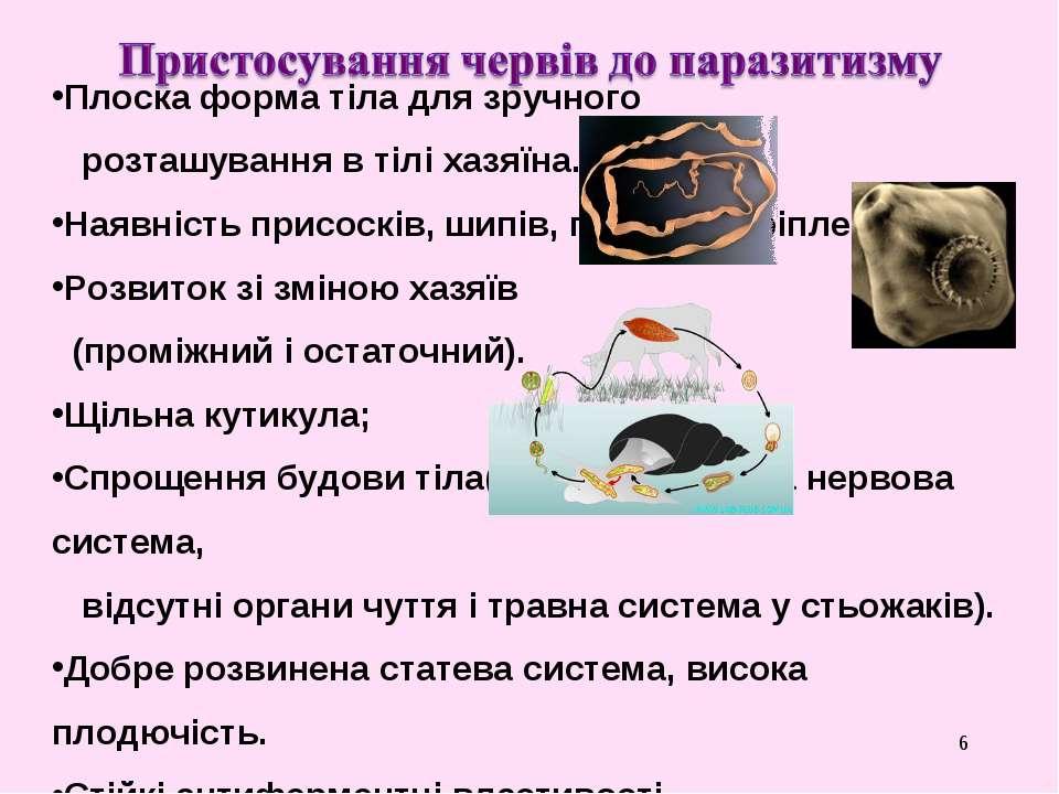 * Плоска форма тіла для зручного розташування в тілі хазяїна. Наявність присо...