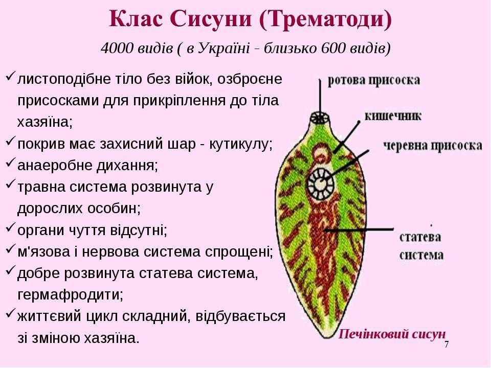 * 4000 видів ( в Україні - близько 600 видів) Печінковий сисун листоподібне т...