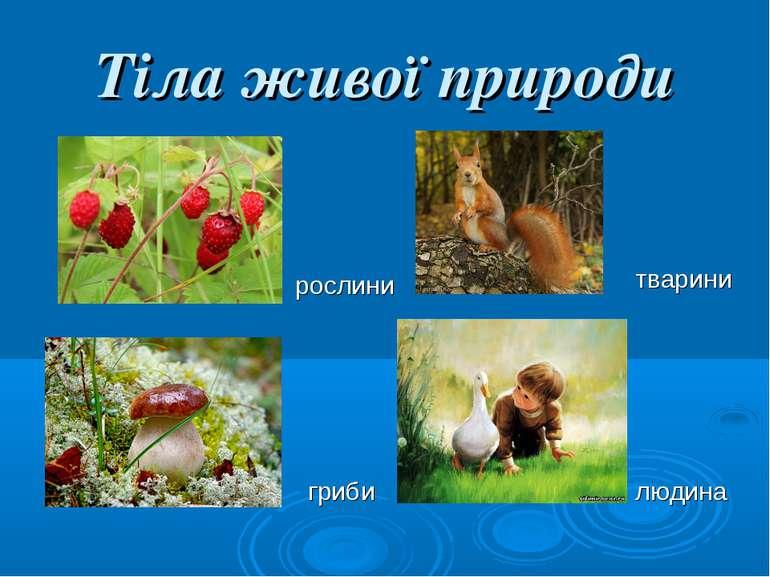 Тіла живої природи рослини гриби тварини людина