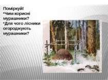 Поміркуй! Чим корисні мурашники? Для чого лісники огороджують мурашники?