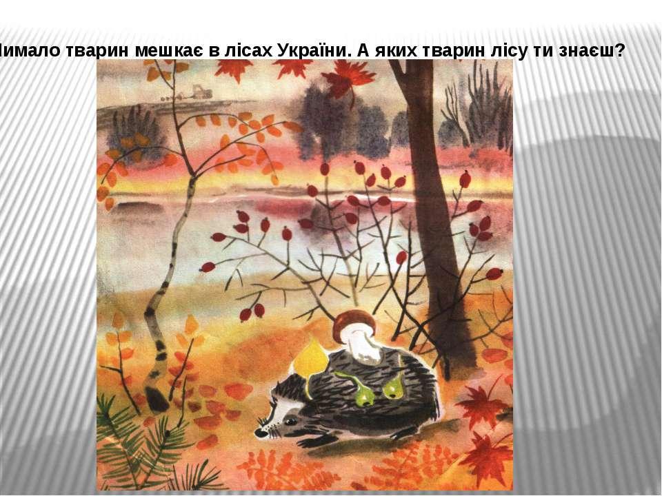 Чимало тварин мешкає в лісах України. А яких тварин лісу ти знаєш?