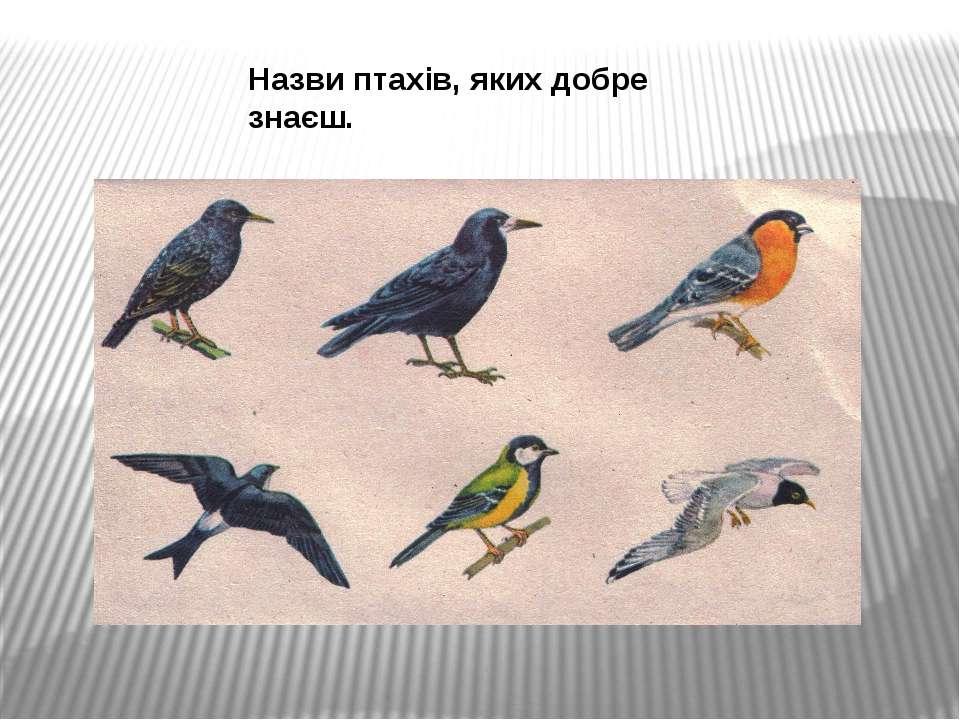 Назви птахів, яких добре знаєш.