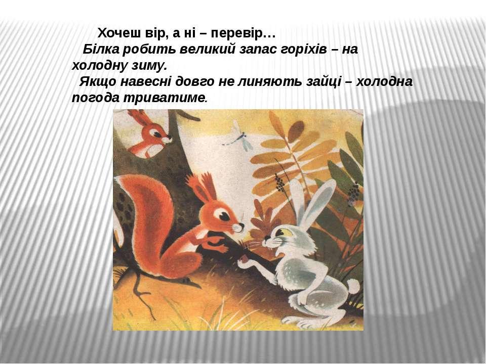 Хочеш вір, а ні – перевір… Білка робить великий запас горіхів – на холодну зи...