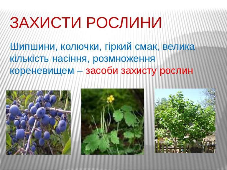 ЗАХИСТИ РОСЛИНИ Шипшини, колючки, гіркий смак, велика кількість насіння, розм...