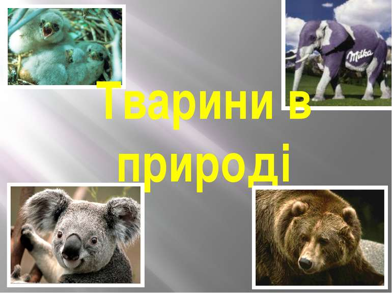Тварини в природі