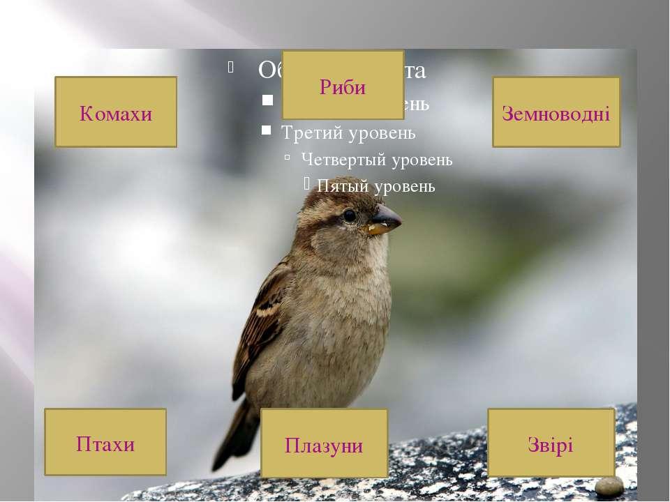 До якої групи належить малюнок? Птахи Плазуни Звірі Земноводні Риби Комахи