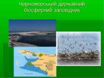 Чорноморський державний біосферний заповідник