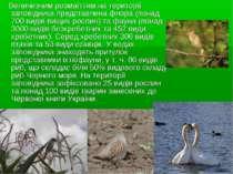 Величезним розмаїттям на території заповідника представлена флора (понад 700 ...