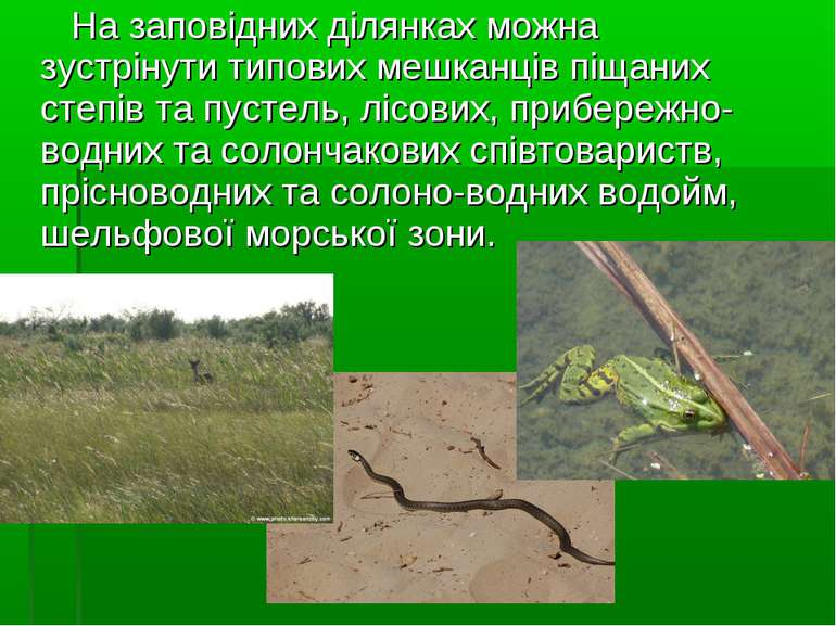На заповідних ділянках можна зустрінути типових мешканців піщаних степів та п...