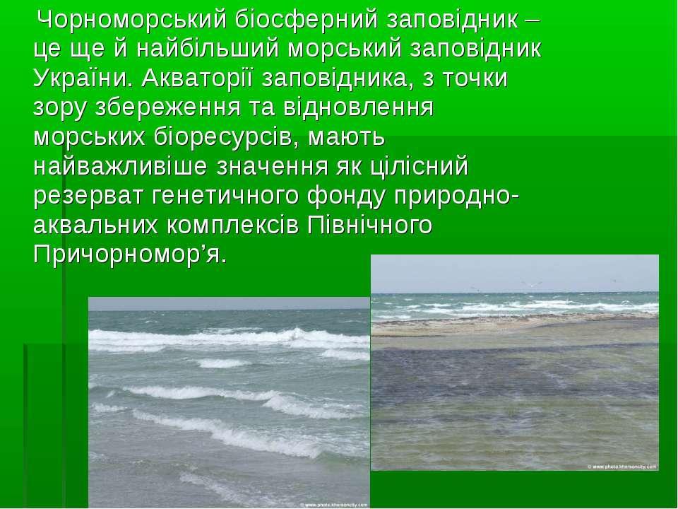 Чорноморський біосферний заповідник – це ще й найбільший морський заповідник ...