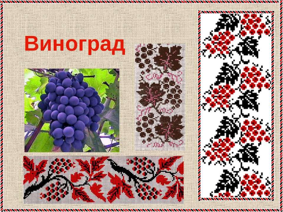 * Виноград