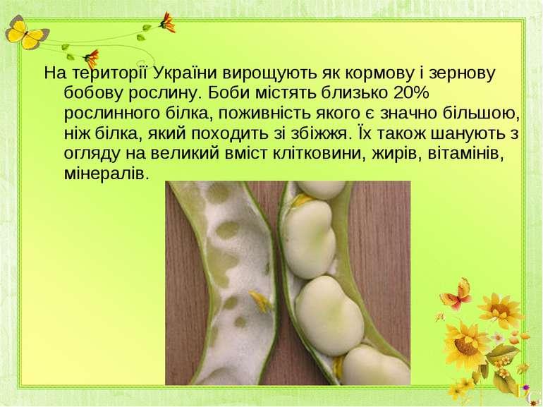 На території України вирощують як кормову і зернову бобову рослину. Боби міст...