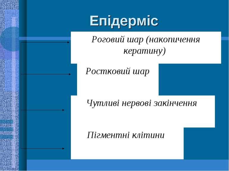 Епідерміс