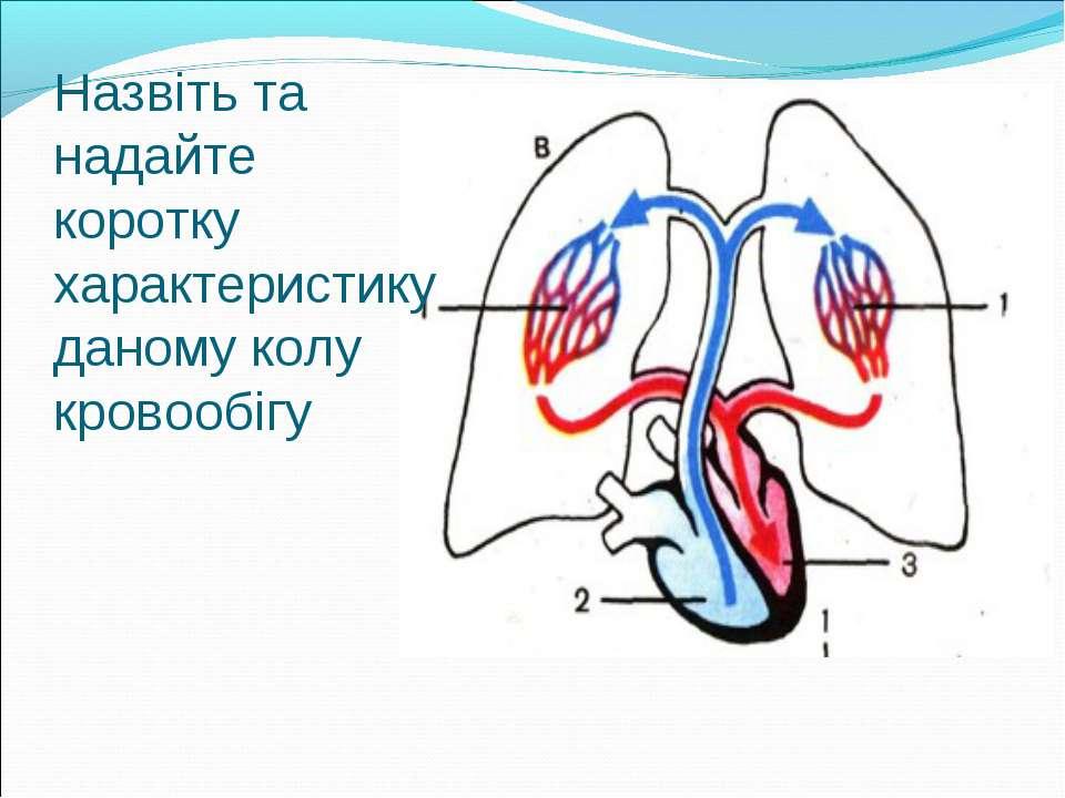 Назвіть та надайте коротку характеристику даному колу кровообігу