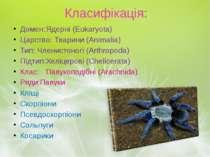 Класифікація: Домен: Ядерні (Eukaryota) Царство: Тварини (Animalia) Тип: Член...