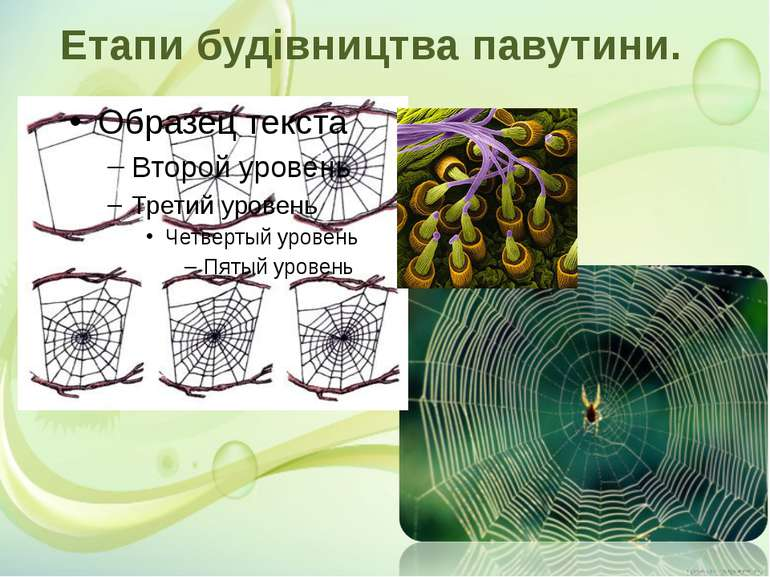 Етапи будівництва павутини.