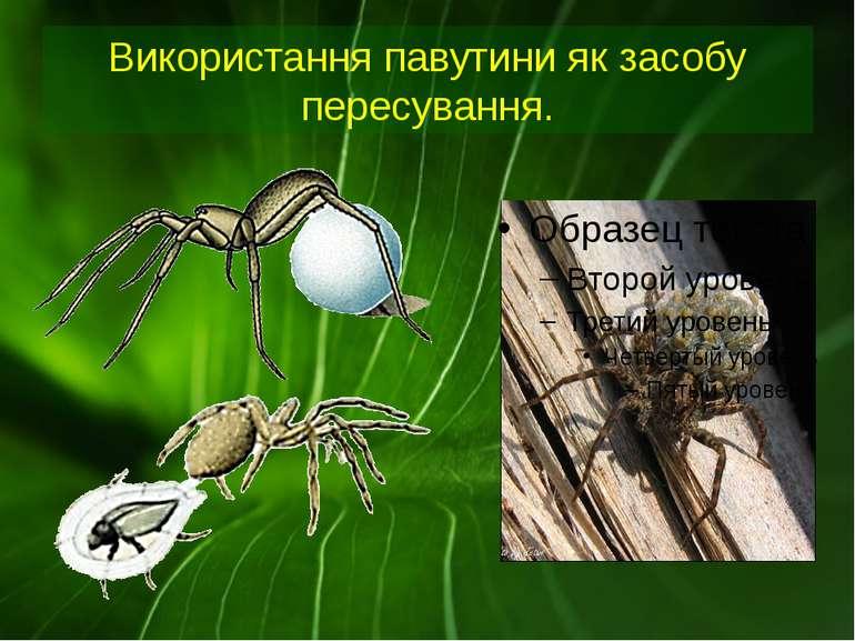 Використання павутини як засобу пересування.