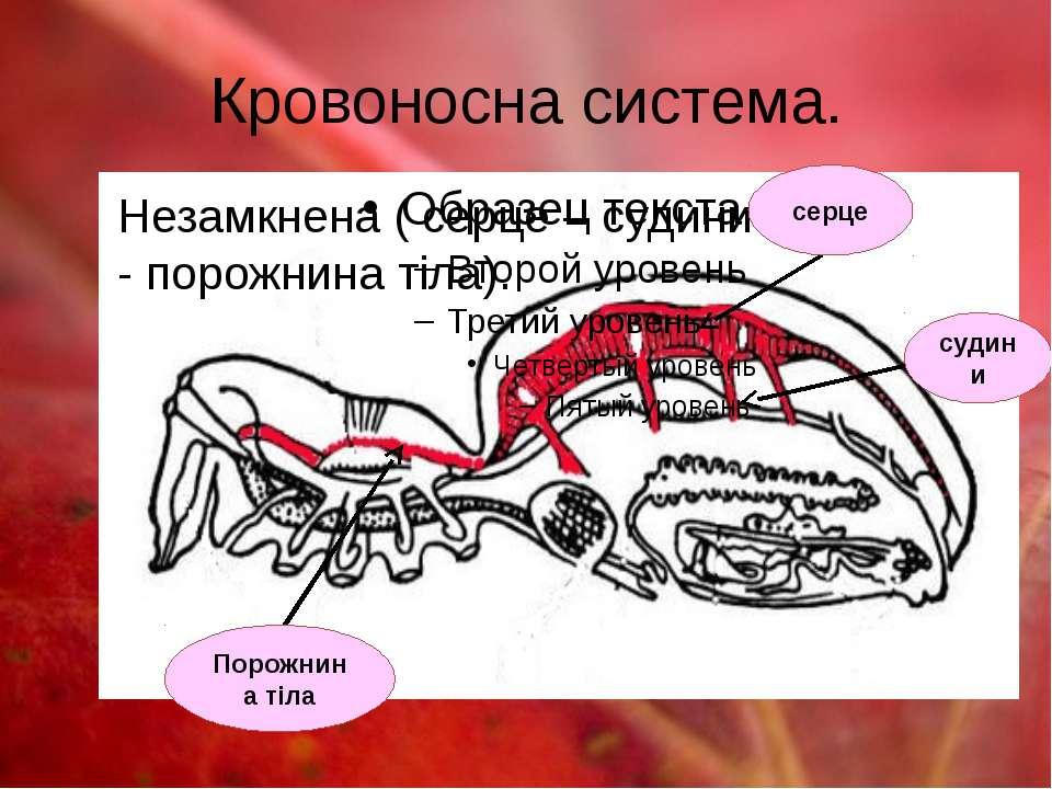 Кровоносна система. Незамкнена ( серце – судини - порожнина тіла). Порожнина ...