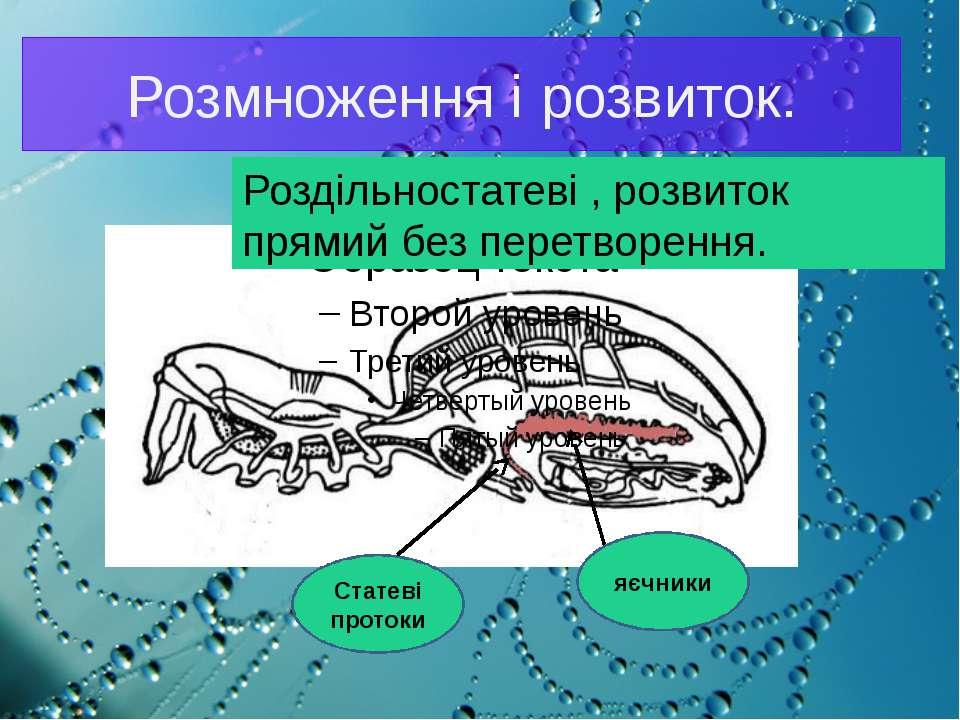 Розмноження і розвиток. Роздільностатеві , розвиток прямий без перетворення. ...