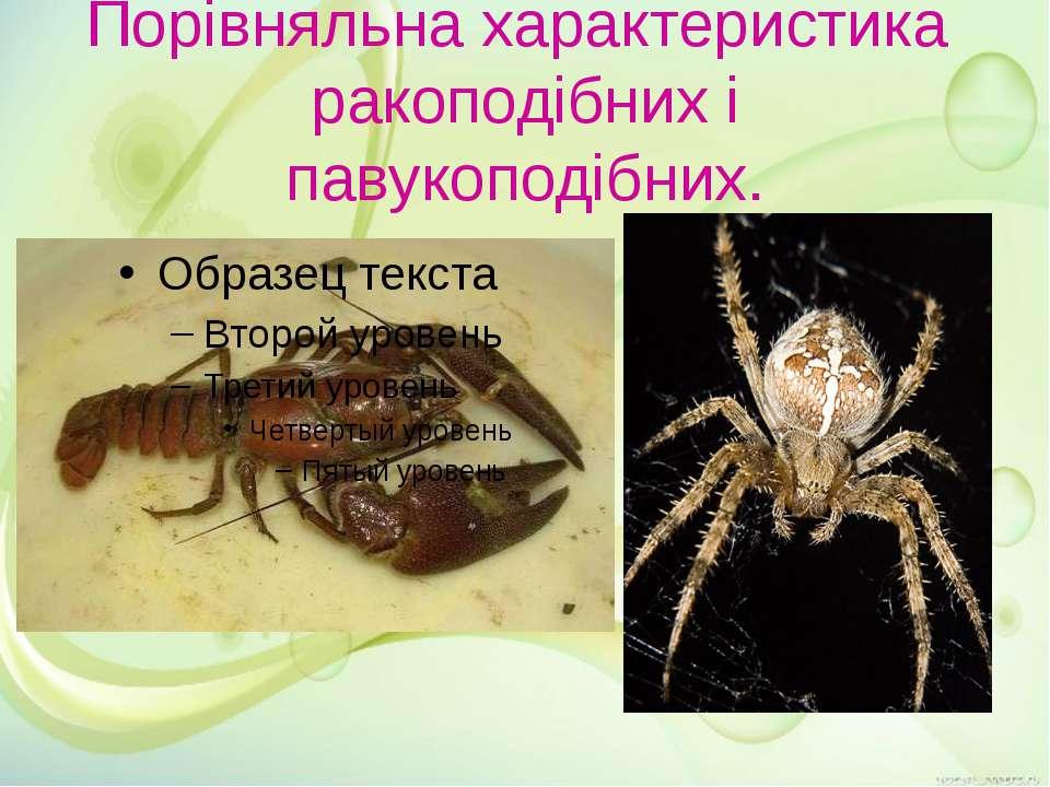 Порівняльна характеристика ракоподібних і павукоподібних.