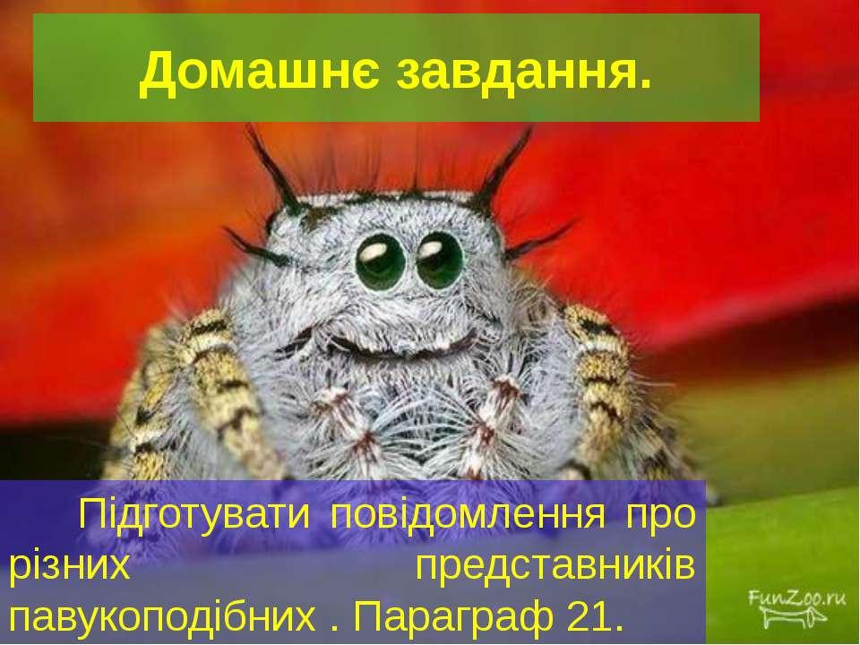 Домашнє завдання. Підготувати повідомлення про різних представників павукопод...