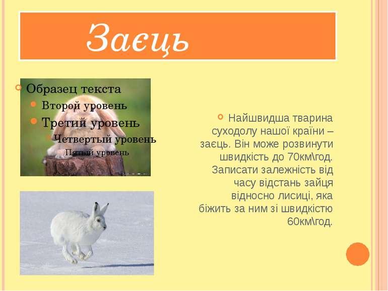 Заєць Найшвидша тварина суходолу нашої країни – заєць. Він може розвинути шви...