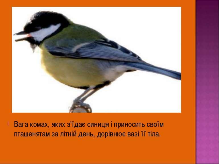 Вага комах, яких з'їдає синиця і приносить своїм пташенятам за літній день, д...