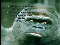 Гібон схильний до прямої ходи. Але жодна з мавп не випрямляє коліна, тому вон...