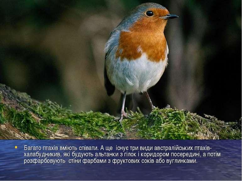 Багато птахів вміють співати. А ще існує три види австралійських птахів-халаб...