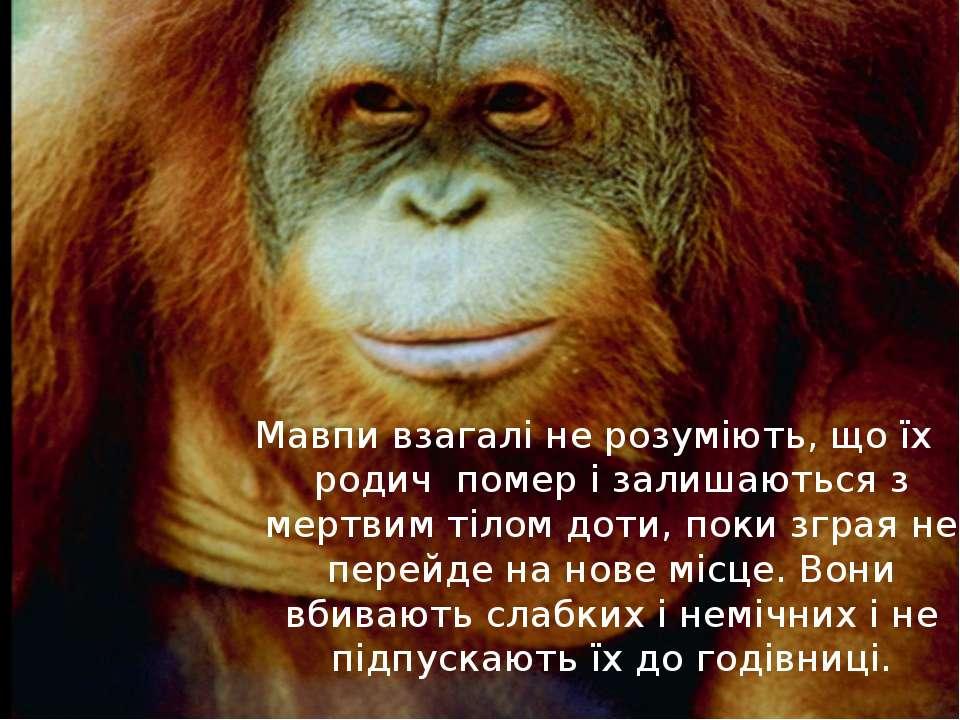 Мавпи взагалі не розуміють, що їх родич помер і залишаються з мертвим тілом д...