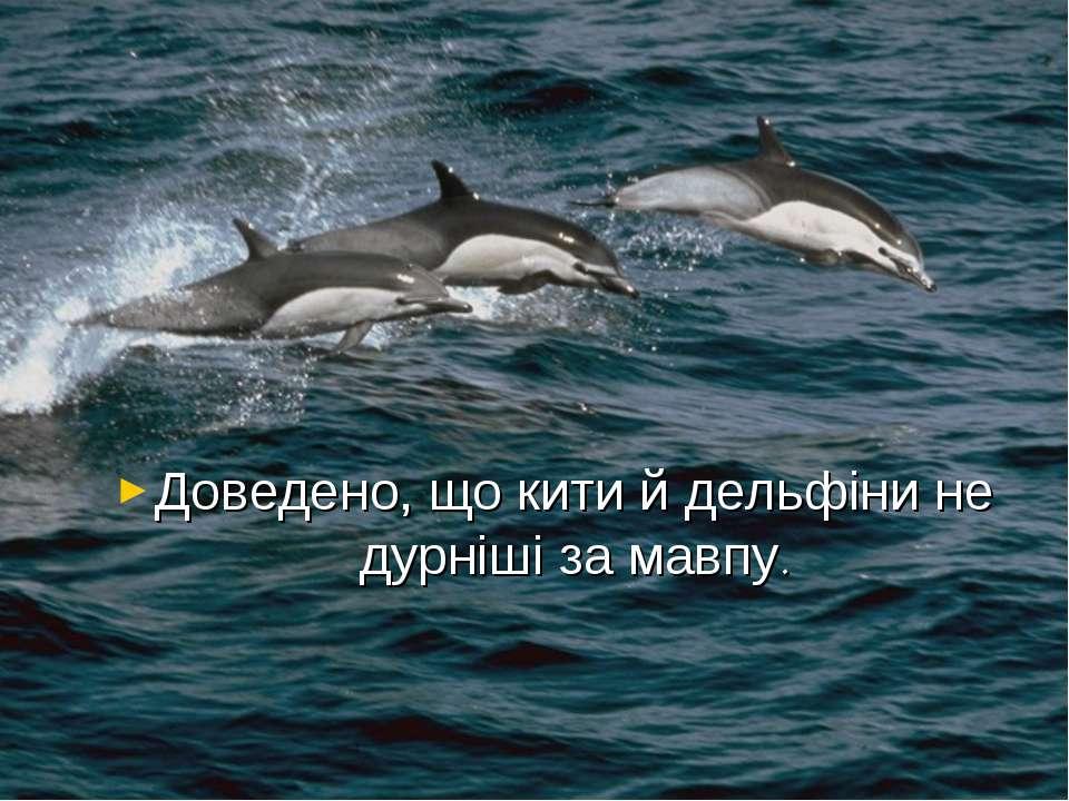 Доведено, що кити й дельфіни не дурніші за мавпу.