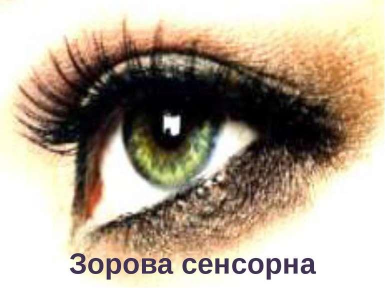 Зорова сенсорна система