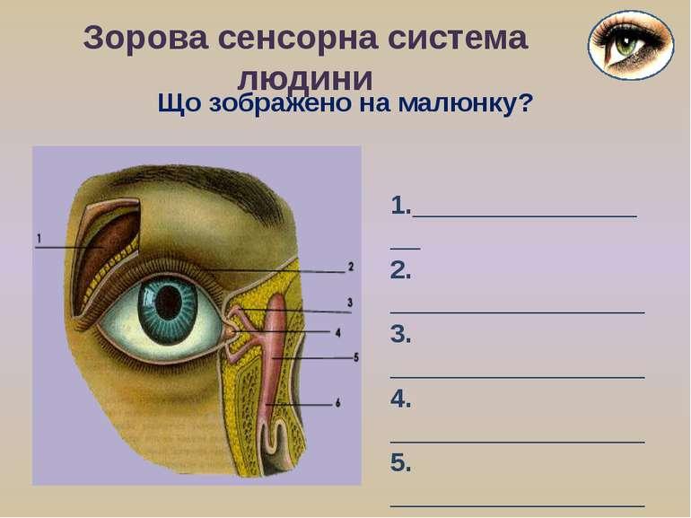 Що зображено на малюнку? Зорова сенсорна система людини 1._________________ 2...