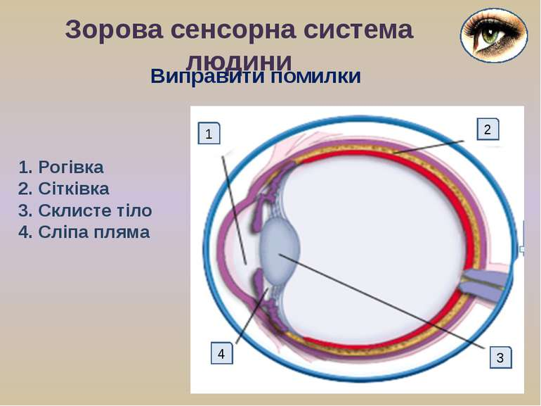 Зорова сенсорна система людини 1 2 4 3 1. Рогівка 2. Сітківка 3. Склисте тіло...