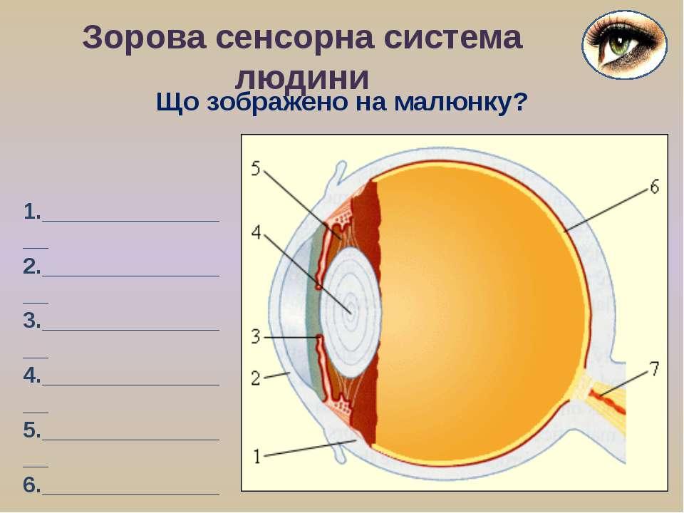 Зорова сенсорна система людини 1.________________ 2.________________ 3.______...