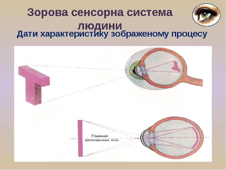 Зорова сенсорна система людини Дати характеристику зображеному процесу
