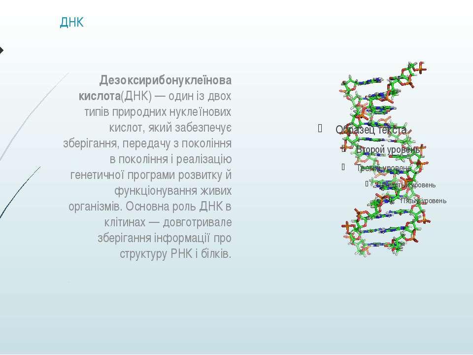 ДНК Дезоксирибонуклеїнова кислота(ДНК)— один із двох типів природних нуклеїн...