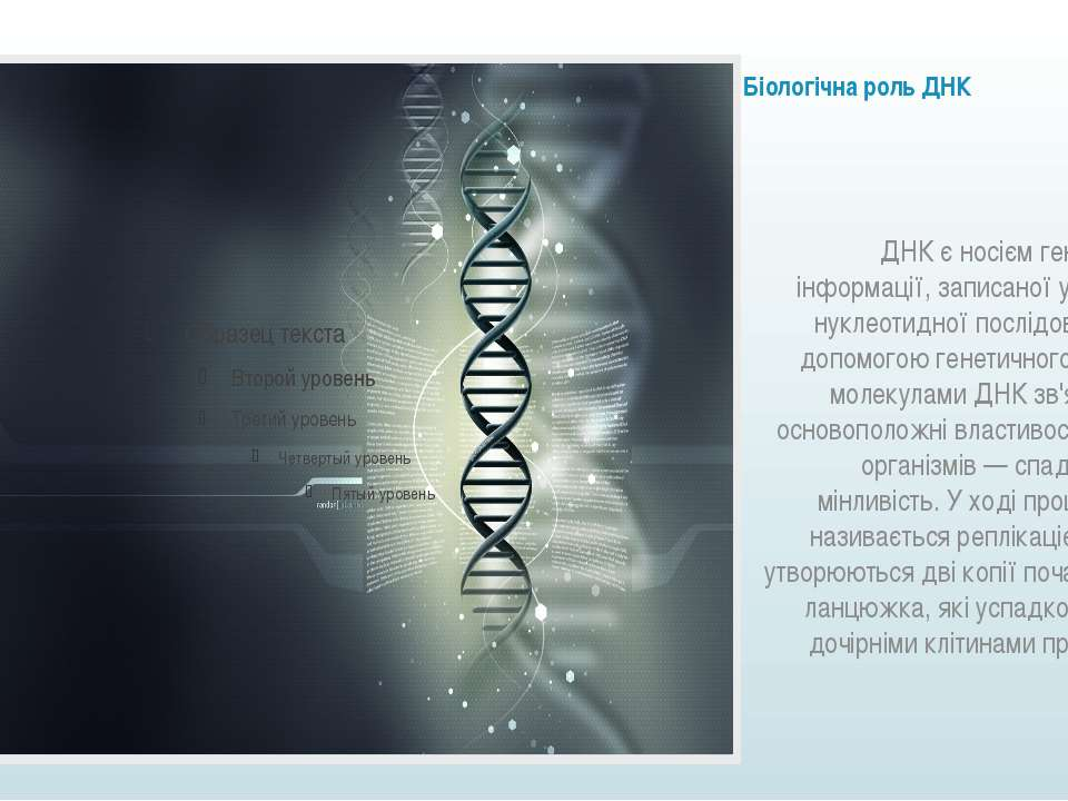 Біологічна роль ДНК ДНК є носієм генетичної інформації, записаної у вигляді н...