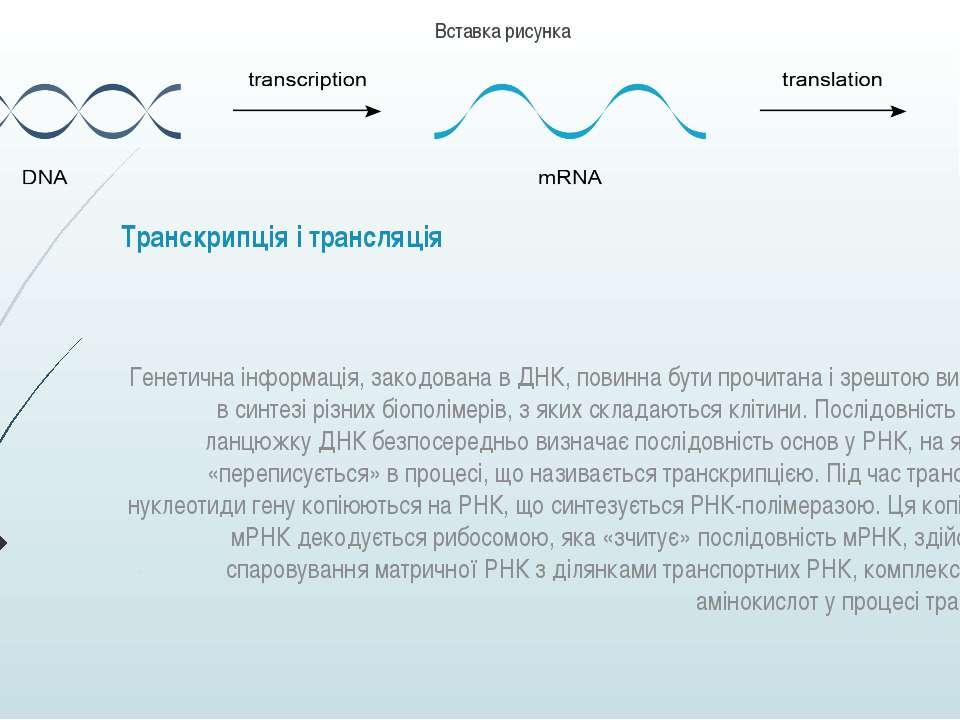 Транскрипція і трансляція Генетична інформація, закодована в ДНК, повинна бут...