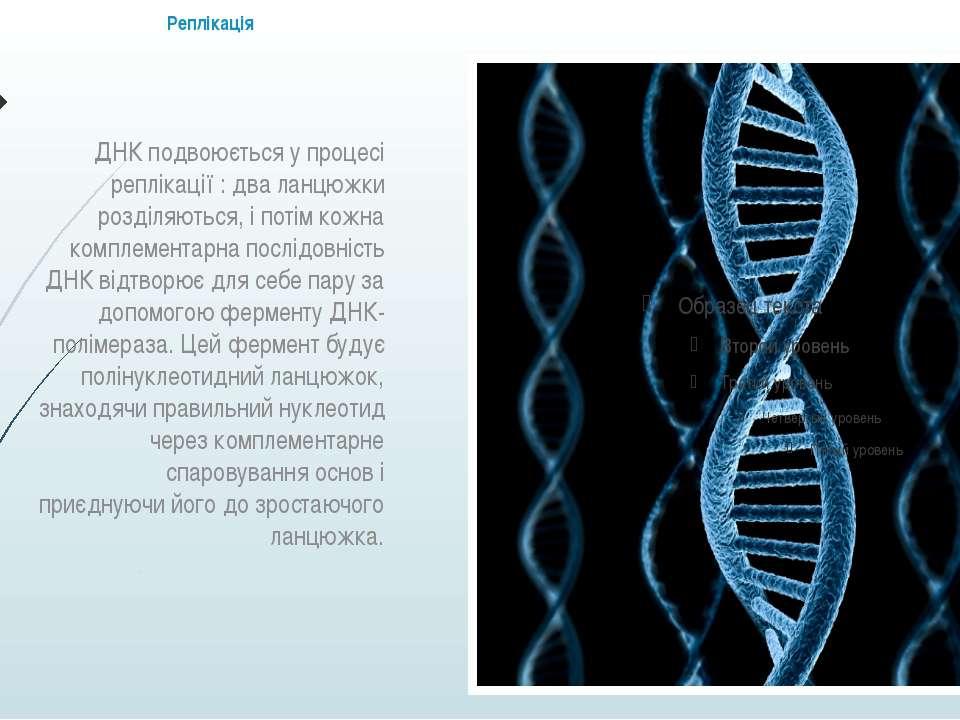Реплікація ДНК подвоюється у процесі реплікації : два ланцюжки розділяються, ...