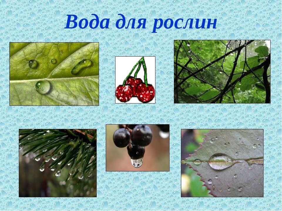 Вода для рослин