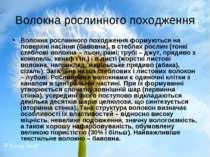 Волокна рослинного походження Волокна рослинного походження формуються на пов...