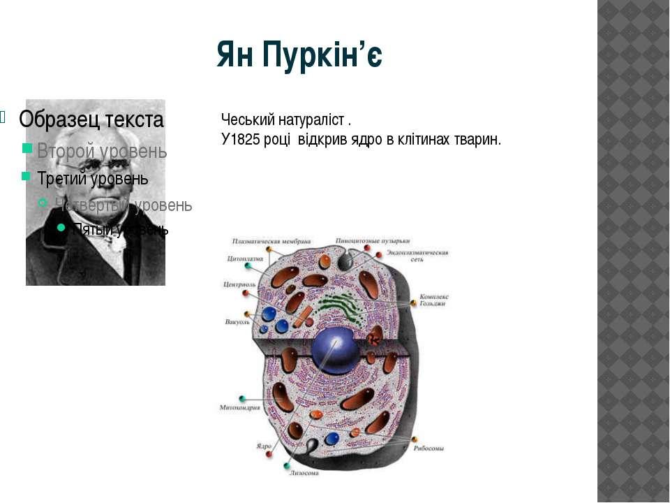 Ян Пуркін'є Чеський натураліст . У1825 році відкрив ядро в клітинах тварин.